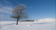 Pure winter (bingleyman2) Tags: