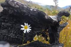 Hope (wilhelmberg) Tags: chile travel patagonia southamerica trekking reisen backpacking torresdelpaine circuit südamerika