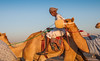 Deserts and Camels 131107 17_10_54 (Renzo Ottaviano) Tags: race al dubai desert united racing course emirates camel arab lorenzo races camels corrida emirate deserts uniti renzo unis arabi carrera corsa emirati unidos camellos chameaux árabes kamelrennen صحراء سباق arabes ottaviano camelos emiratos emirados vereinigte arabische cammelli emiratiarabiuniti émirats الهجن هجن سباقات المرموم marmoun