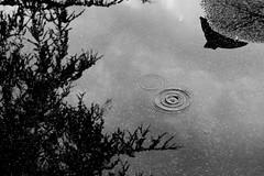 Pozzanghera (lumun2012) Tags: lucio mundula bw