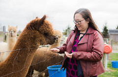 medina-7752 (FarFlungTravels) Tags: alpaca animal farm medinacounty onefineday shear wool