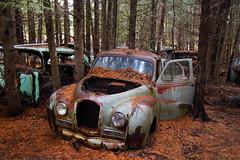IMG_2753 (Irina Souiki) Tags: rusty crusty cars mcleansautowreckers milton ontario old oldcars