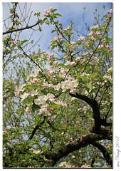 Frühling im Garten (Mr.Vamp) Tags: frühling garten mrvamp mrvampvamp vamp spring blühen blüte
