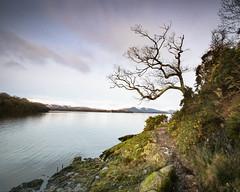 Tree, colour (strachcall) Tags: lochlomond landscape sky tree scotland balmaha water lochlomondtrossachs