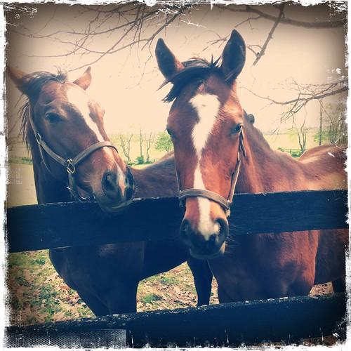 Lexington horses. Mount Pisgah
