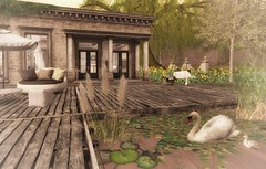 Swan Family (Engelsstaub Resident) Tags: │t│l│c│ cosmopolitan nerenzo secondlife applefall whimberly