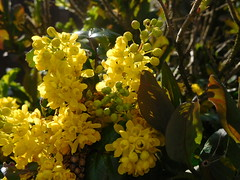 All  Things Yellow (claire artistandpoet Stroke Survivor) Tags: spring yellow plant lush