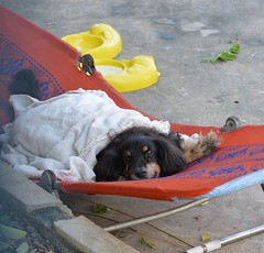 canine lounger (the foreign photographer - ฝรั่งถ่) Tags: dog canine blanket lounge chair lounger khlong thanon bangkhen bangkok thailand nikon d3200