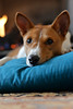 Scarlett O'Hara (tacosnachosburritos) Tags: basenji doggystyle loafing pet dog barkless yodeler relaxing chilling