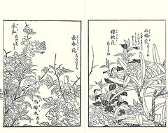 Chinese quince, Japanese andromeda, China rose, cherry and Metternich's rhododendron (Japanese Flower and Bird Art) Tags: flower chinese quince chaenomeles speciosa rosaceae andromeda pieris japonica ericaceae china rose rosa chinensis cherry prunus metternich's rhododendron metternichii shigemasa kitao kano woodblock picture book japan japanese art readercollection