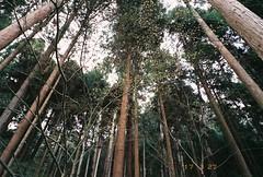 (夏先生) Tags: naturaclassica fujifilm natura classica tudor200 tudor tudorcolor xlx 200 film analog analogue kyoto japan