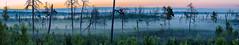 The Foggy Dawn just Before the Sunrise (ZoeEnPhos) Tags: tyresta dawn gryning sommarnatt summernight night morgonrodnad kesäyö twilight brandfältsområdet nationalpark tyrestanationalpark torrakor forestfirearea skogsbräntområde sweden panorama panoramic canoneos5d canonef135mmƒ20lusm snags deadtrees dimma dimmor fog mist lightroompanorama