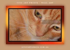 Cat-Fine-Art-Prints-DSC-5530 (fatima_suljagic) Tags: fineartprints photo photographer photographermelbourne wideprints canvasprints photoprints australia landscapephotography naturephotographer cat catphotography