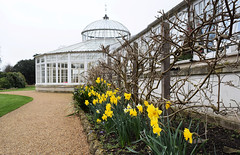 Chiswick House & Gardens - London (Mark Wordy) Tags: chiswickhousegardens london springflowers daffodils narcissus glasshouse conservatory italiangarden