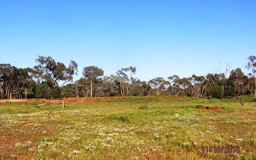 * Salt Bush Holdings, Cobar NSW