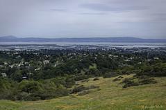 Southern San Francisco Bay (Greatest Paka Photography) Tags: shallow estuary water sanfranciscobay bayarea california peninsula eastbay landscape fremont bay