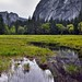 Mountain+Reflections+off+a+Pond+of+Water+%28Yosemite+National+Park%29