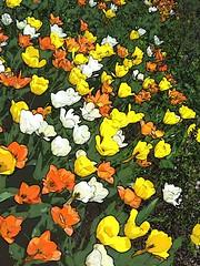 1000 big ups (JoelDeluxe) Tags: albuquerque biopark botanical garden nm newmexico joeldeluxe