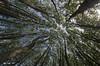 cuando me apetece mirar...nexo de unión, luz (_DSC1348) (Rodo López) Tags: elbierzo españa explore elcampo excapture espacio arboles azul bosques nikon naturaleza nature naturalezacautivadora nostalgia naturebynikon spain sentimientos sol picado