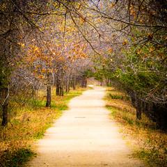 Budding Canopy (Daniel-Godin) Tags: afton aftonstatepark canon canon7dii canopy capturemn captureminnesota danielgodinphotography dirt exploremn mn minnesota nature path secluded sigma sigma150600mm stateparks trees