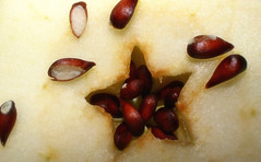 Apple seeds in a star (michelecarbone900) Tags: macromondays macro seeds canon100d hmm apple