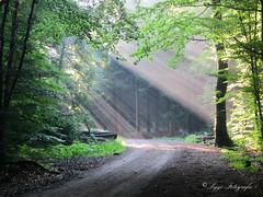 Wald (Siggi2409) Tags: wald natur impression sonnenstrahlen outdoor verträumt