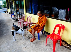 ,, Street Photography, Jungle Style ,, (Jon in Thailand) Tags: street streetphotography streetphotographyjunglestyle monk dog dogs k9 k9s jungle monkeytemple red yellow blue green orange reflections mop broom pink nikon d300 nikkor 175528 bucket calm mrkindmonk plasticchair littledoglaughedstories