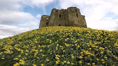 Castle of Daffodils (gary.t.17) Tags: explore view yellow high low 100faves 75faves lpov 50faves flowers gopro daffodils castle