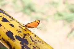 Borboleta bairro São João JM - Wir Caetano - 26 04 2017 (26) (dabliê texto imagem - Comunicação Visual e Jorn) Tags: borboleta inseto amarelo escada ferrugem