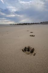 Tracks... (D1g1tal Eye) Tags: sea coast beach groyne print track dog sky cloud nikon d7000 sigma 1020mm
