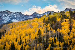 Aspens at Peak (b_mccarley) Tags: ouray colorado co fall autumn nature natural landscape color colorful aspens aspen trees mountain rocky mountains rockymountains