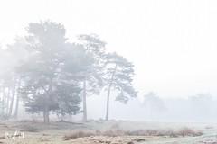 Foggy day (Renate van den Boom) Tags: 04april 2017 boom bos europa gelderland heide jaar landschap maand mist natuur nederland renatevandenboom veluwezoom weer