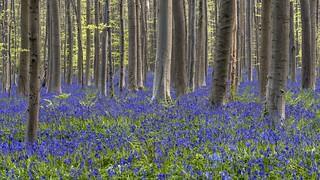 *purple-blue*