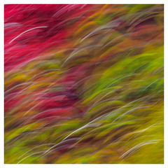 112/365 (Jane Simmonds) Tags: icm intentionalcameramovement abstract acer tree maple blur 112365 3652017 nature
