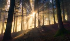 Strider (@hipydeus) Tags: wald forest landscape nature bayern bavaria lightrays lichtstrahlen sonnenstrahl