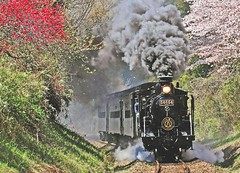 steam locomotive-01 (itsuo.t) Tags: steamlocomotive train localtrain kumamotopref hitoyosicity sakurablossoms plumblossoms