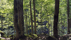 Hayedo (alvaro31416) Tags: hayedo haya bosque pirineos