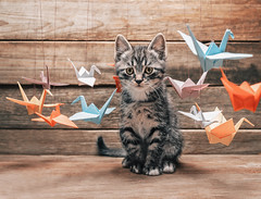 The Beginner's Guide to Origami (Origami.me) Tags: crane cute feline fluffy kitten kitty origami paper pet small tabby cat animal little mammal papercraft craft diy fold folding