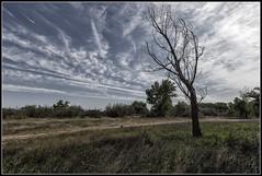 La Alfranca (Fernando Forniés Gracia) Tags: españa aragón zaragoza laalfranca paisaje árboles contraluz landscape nubes cielo pastriz