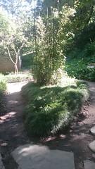 (sftrajan) Tags: strybingarboretum japanesemoonviewinggarden sanfranciscobotanicgarden botanischergarten botanicalgarden goldengatepark 2017 spring jardinbotanico jardínbotánico jardinbotanique botaniskhave botaniskträdgård