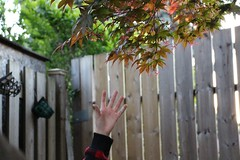 """I can't reach"" (dawn-elle) Tags: autumn summer baby leaves fence season photography lights photo leaf hands backyard infant colours child hand brother five fingers can stretch cant read help reach grab"