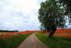 Vi ska hitta egna små ställen (Marie Granelli) Tags: road summer tree field june skåne sweden explore söderslätt d3000
