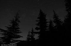 Forest Sentinels (John Behrends) Tags: nature night forest stars nightshot pentax pentaxk01