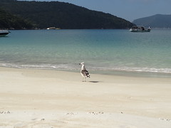 Praia do Forno - Arraial do Cabo (Casal de Mochilo) Tags: sea praia beach beautiful rio de mar cabo do janeiro seagull gaivota forno arraial