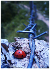 lady bug (ali_awais) Tags: wood red mountain green nature beautiful beauty lady bug insect photography wire random pavement