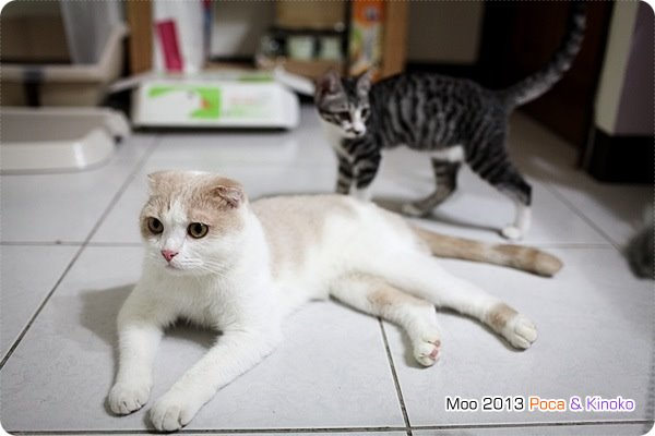 Poca&キノコ Kinoko