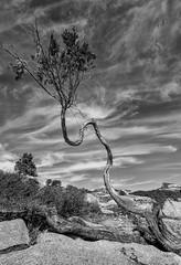 Above Tenaya Canyon, Yosemite National Park, CA (arbabi) Tags: california usa tree nature pine america landscape unitedstatesofamerica dome granite yosemitenationalpark olmstedpoint tenayacanyon uswest seanarbabi tenayacreek doctorsuess