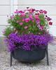 Vackra blommor i Vingåker 2013-07-25 (Torgil Jarnling) Tags: blommor vackra vingåker 20130725