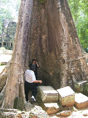 A deep recess in a tree (oldandsolo) Tags: cambodia buddhism tourists worldheritagesite restoration siemreap taprohm tombraider buddhisttemple angkorarchaeologicalpark khmerkingdom theruinsofangkor buddhistfaith angkortempleruins