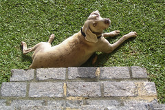 Em guarda (Ha1000) Tags: dog co grass tile olhar stair watching guard grama cachorro escada piso gramado coleira stairstep degrau atento ladrlho